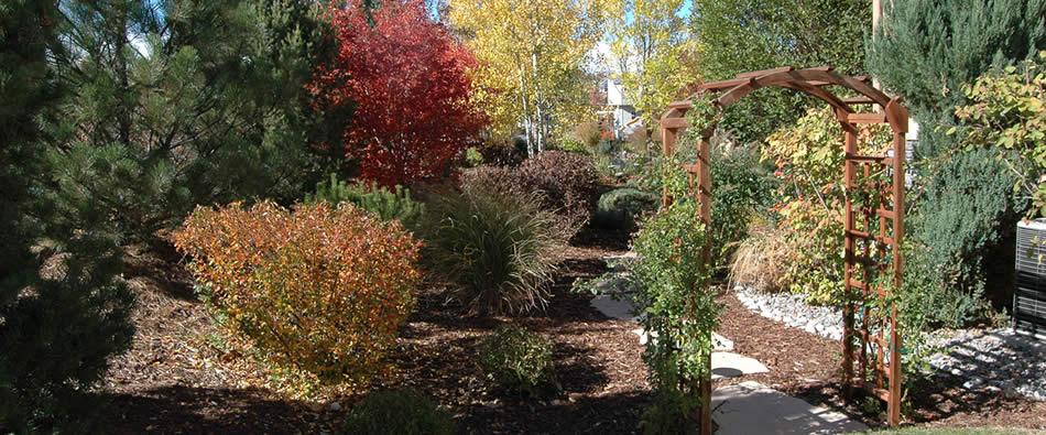 Autumn Gold Landscapes Denver